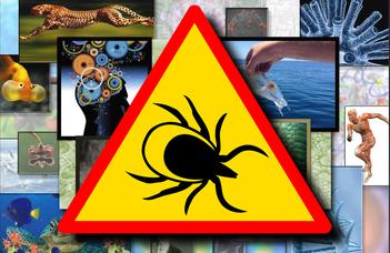 A Lyme-kór diagnózisáról és kezeléséről