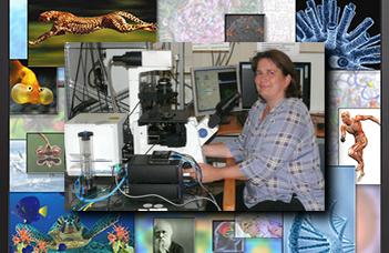 Hogyan tanulnak az idegsejtek a Petri csészében?