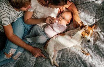 A kutya úgy kötődik a gazdájához, mint gyerek az anyjához