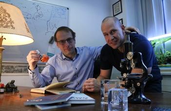 Sikerrel tesztelik a stroke utáni izomgörcsöket oldó hatóanyagot