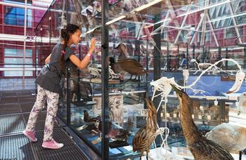 Az ELTE muzeális gyűjteményeinek jelene és jövője