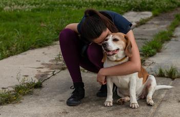 A kutyák szeparációs szorongása