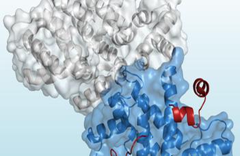 A Biokémiai Tanszék kutatóinak új módszere segíti a fehérjeszerkezetek megismerését