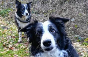 Kölyökkortól öregkorig: a kutyák személyiségének változásai