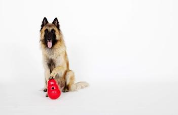Új kutatás a kutyák elmeolvasó képességéről