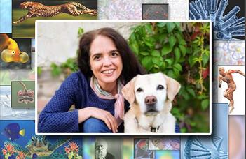 Az öregedés kutatása kutyákon