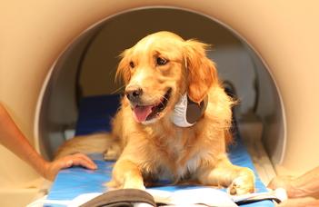 Mi zajlik a kutyák agyában, miközben beszélünk hozzájuk?