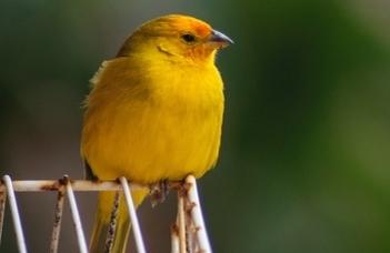 A klímaváltozás még a madárénekből is kimutatható