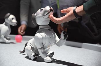 Amikor a robot visszakérdez – a kutya mint koncepció fontos