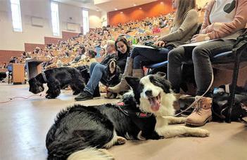 VII. Kutyaetológia Konferencia