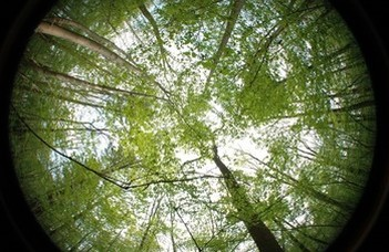 Treetops protect forest life from global warming