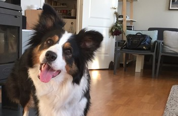 Játékkal az idősebb kutyák is képesek új szavakat megtanulni