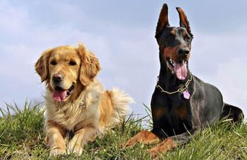 Közérthetően a kutyaetológiáról