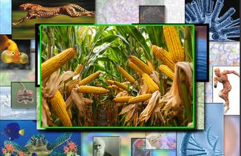 Élő adás: Zöld biotechnológiák a fenntartható növénytermesztésért
