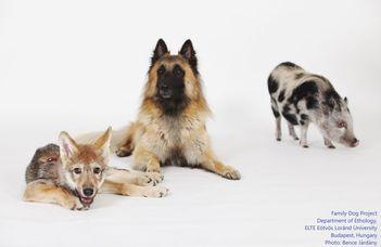 VIII. Kutyaetológia konferencia