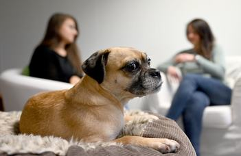 Grumpy Dogs Outperform the Friendlies on Some Learning Tests (TheNewYorkTimes)