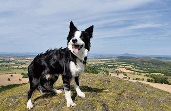How a dog's life affects its personality (TheTimes)