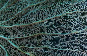 Az élet korallja