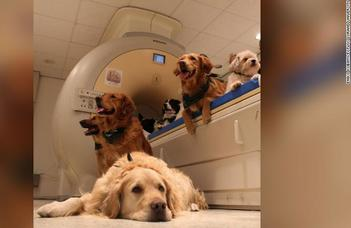 Dogs' brains aren't hardwired to care about human faces (CNN)
